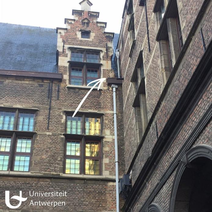 De uil van Universiteit Antwerpen.