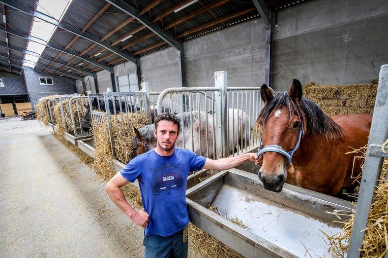Dominique Vandendriessche bij een van zijn trekpaarden.