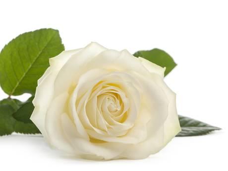 Witte roos voor agenten na zelfdoding Woerden