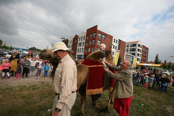 Kinderen maken een ritje op een kameel in Tholen