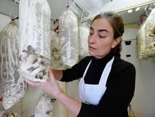 "Koffiedrab het zwarte goud voor Tilburgse oesterzwamkweker: ,,Van afval naar voedsel"""