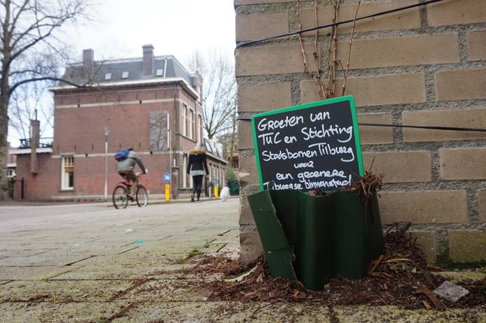 Nieuw groen aan de Korte Schijfstraat.