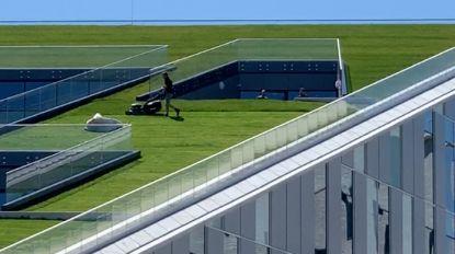 VIDEO. Schat, maai het gras nog eens af... op het dak