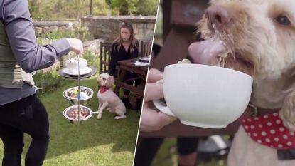 Deze luxueuze verwennerij voor honden moet baasjes naar hotels lokken