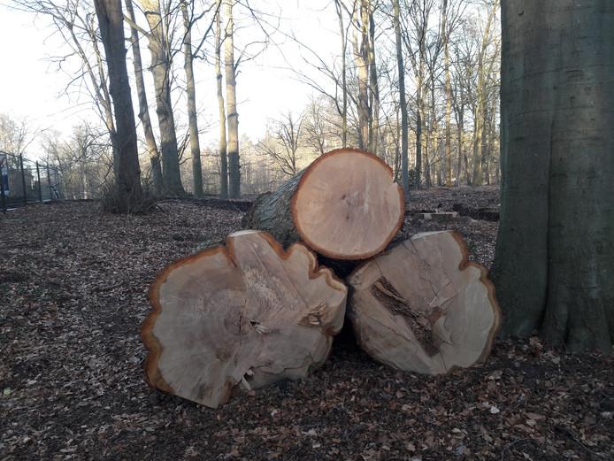 Gevelde stammen op landgoed Heidepark.