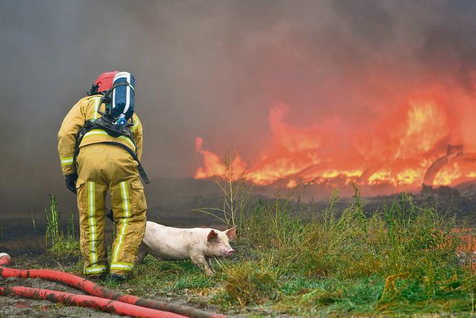 Beelden van brand in een varkensstal in Asten-Heusden