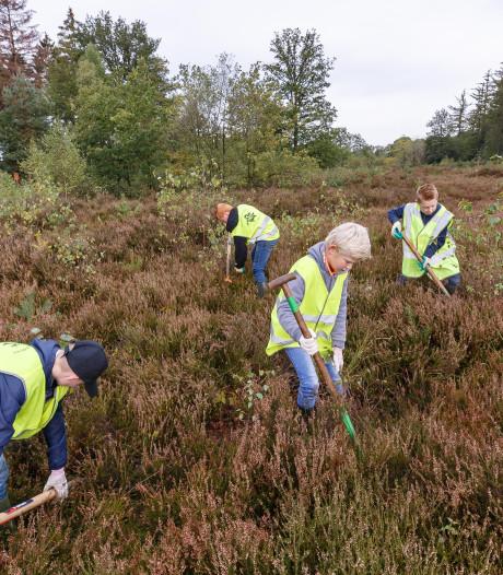 Vrijwilligers schonen heide in boswachterij Staphorst op