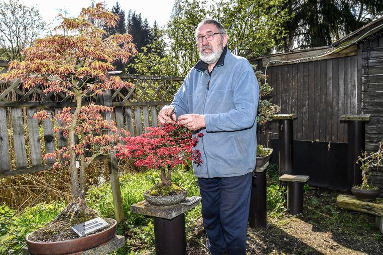 """Andre Callaert verzorgt zijn bonsais elke dag. """"De emotionele waarde van de gestolen exemplaren is enorm"""", zegt hij."""