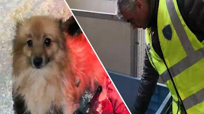 Op de boerderijen werden op het moment van binnenvallen ruim 150 hondjes aangetroffen.
