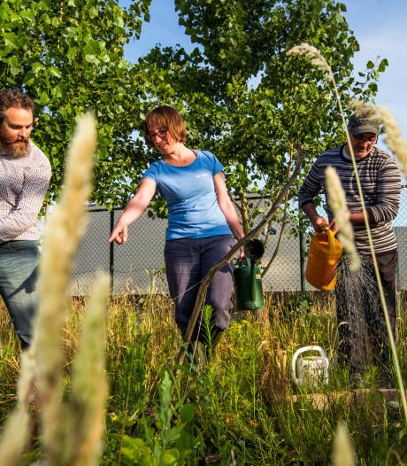 Verborgen groen: Niets eigen, alles wordt gedeeld in de Tineltuin in Eindhoven