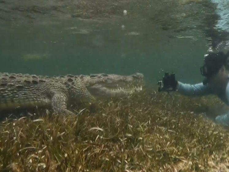 Fotograaf komt wel heel dicht bij krokodillen