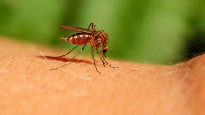 Zo geef je muggen deze zomer geen kans