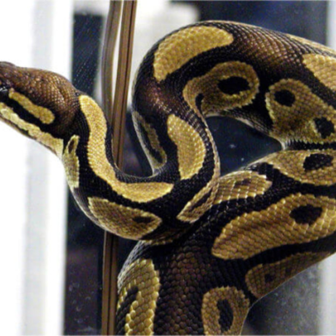 Foto ter illustratie. Deze slang is niet Michiel.