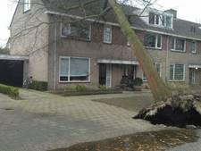 Boom valt tegen huis in Oisterwijkse Jozef Israëlsstraat: 'Samen renden we naar buiten'