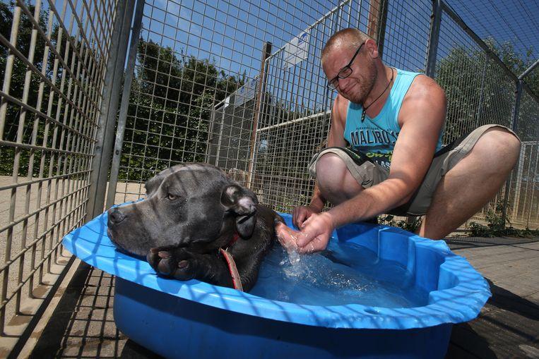 Deze hond kreeg afgelopen de nodige afkoeling in het dierenasiel van Sint-Truiden