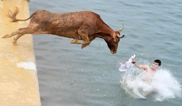 Een stier sprong gisteren de zee bij Dénia in.