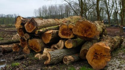 Gemeente veilt hout gevelde kastanjebomen
