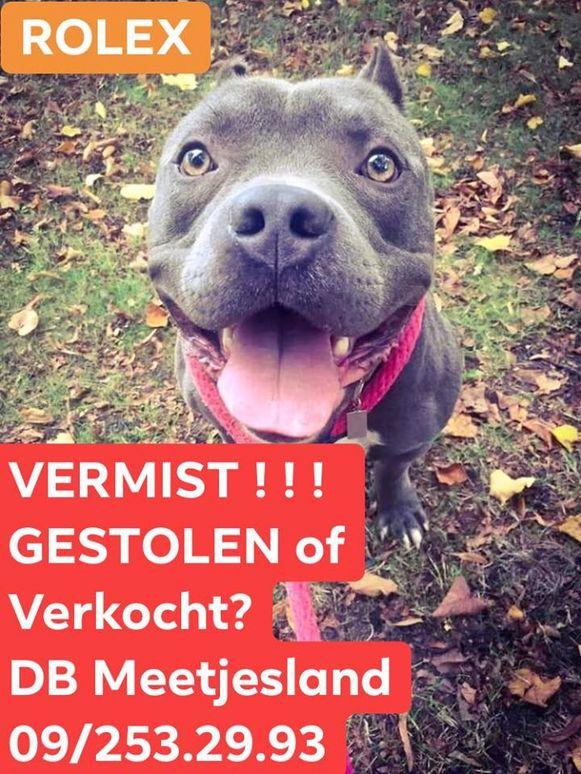 De hond Rolex werd wekenlang gezocht.