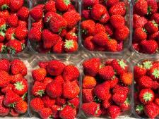 Mega-aardbeienkas Dutch Berries in Zuilichem geopend