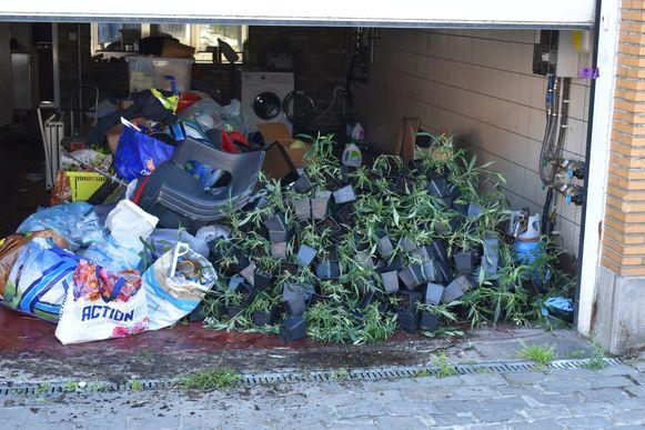 In de woning troffen speurders meer dan 600 cannabisplanten aan.