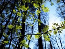 Twee 'Tiny Forests' in gemeente Moerdijk