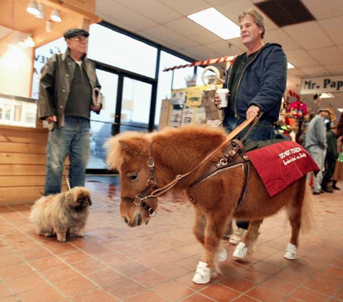 In Amerika worden al diverse geleidepaarden ingezet.