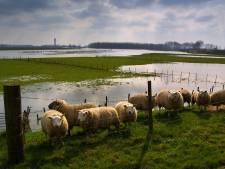 Meer ganzen, minder landbouw: boeren balen van Maasplan