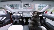 VIDEO. Tesla lanceert 'hondenmodus'