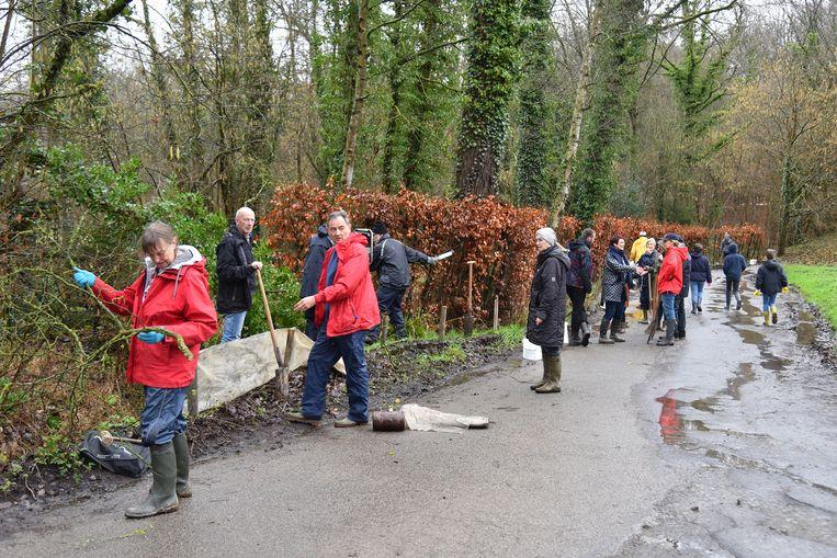 De voorbije weken waren veel mensen in de weer om de kikkers te helpen in de Haakstraat.