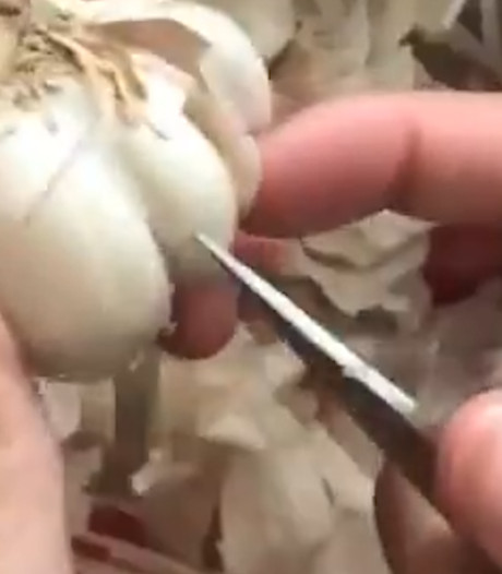 Verbluffende manier om knoflook te pellen gaat viraal