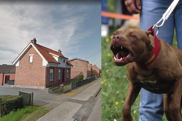 De vrouw wandelde te voet voorbij deze woning. De twee pitbulls sprongen over de omheining en vielen haar zonder enige aanleiding aan.