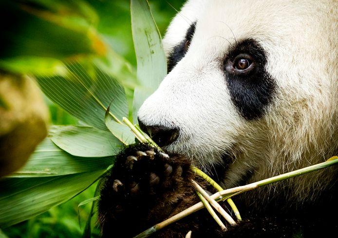Naar Het echte leven in de dierentuin keken half juli  bijna 1,1 miljoen mensen, blijkt uit cijfers van Stichting KijkOnderzoek.