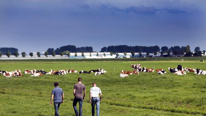 Arnold van Adrichem, Paul van Leeuwen en Ron Olsthoorn in het weiland; in de verte het kassengebied.