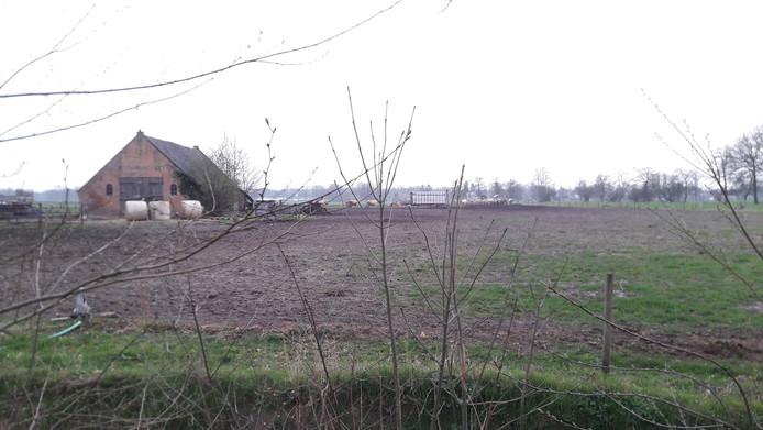De koeien van Van Dorresteijn lopen nu rond zijn schuur aan de Peter van den Breemerweg.