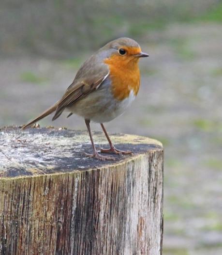 Vogels zingen en roepen niet zonder reden