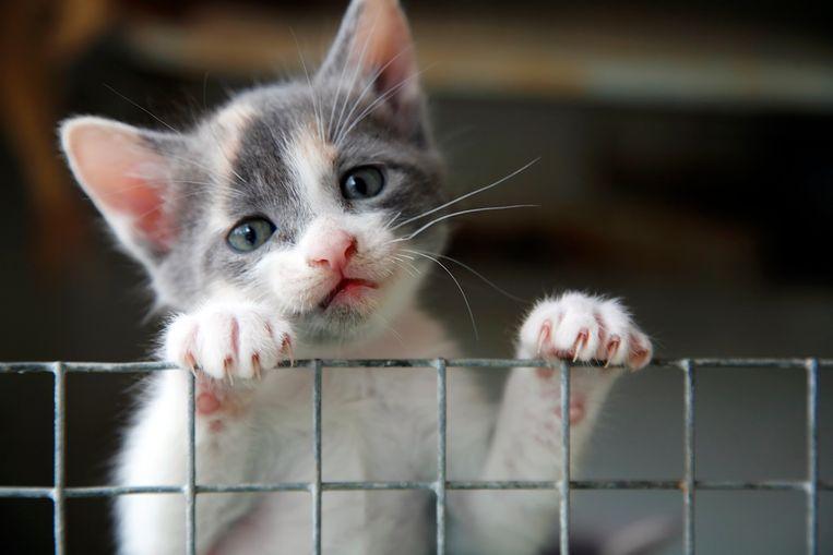 Niets zo vervelend als katten die jouw tuin als kattenbak gebruiken. Of het nu je eigen dieren zijn of die van de buren, hoe beperk je de schade? Want niemand wil uitwerpselen in zijn moestuin of geplette jonge plantjes omdat katlief daar net zo graag ligt te zonnen. Onze tuinexperte geeft tips om katten uit je tuin te houden. Welke middeltjes helpen echt?