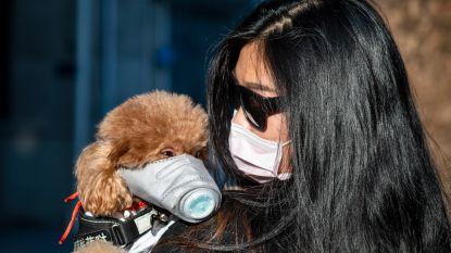 Eerste hond in quarantaine: Hongkong roept inwoners op om geen huisdieren meer te kussen