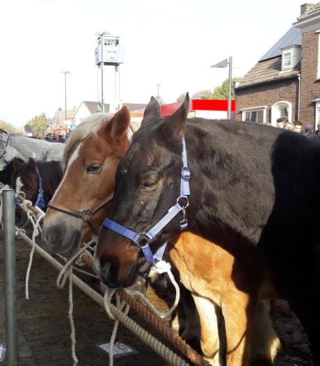Hedel met een gerust hart op naar de 300ste paardenmarkt