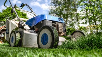 Gemaaid gras gebruiken als compost: mag dat?