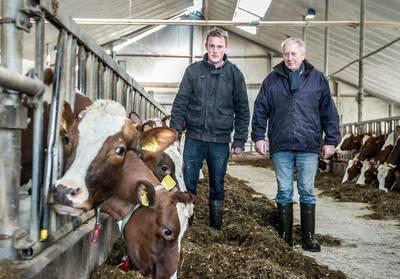 boeren-naar-rechter-tegen-doodsteek-oud-hollandse-koeienrassen