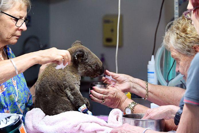 Het Port Macquarie Koala Hospital in Port Macquarie  in de deelstaat New South Wales waar ook Lewis werd opgevangen.