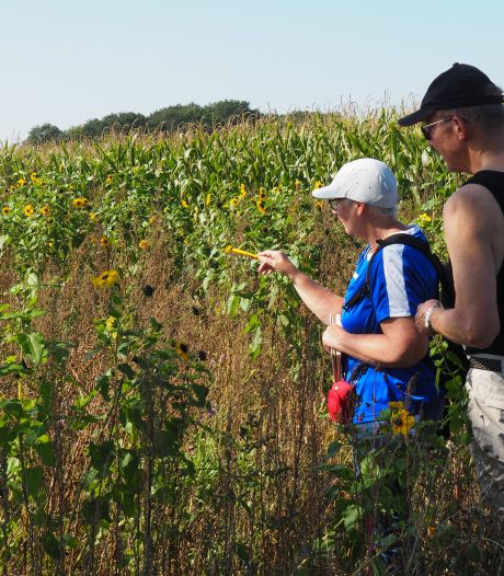 Bij de zomerse vlindertelling in Salland zijn zeldzame soorten gespot: 'Zelfs een aantal van de rode lijst'