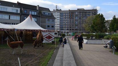 """Bende hangjongeren veroorzaakt overlast op en rond het Groenplein: """"Dealen, mensen lastig vallen en baldadigheden"""""""