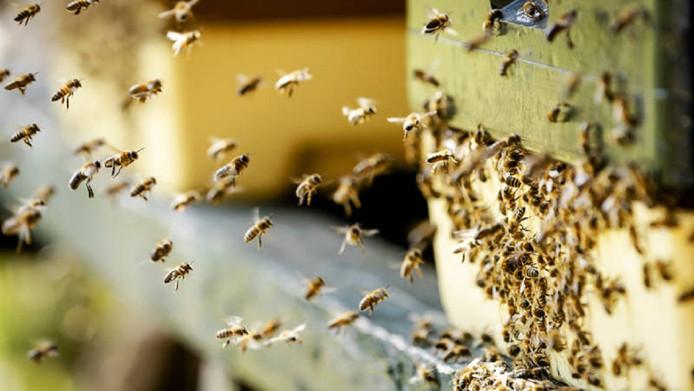 Nederland voert vooral bijen, sluipwespen, meelwormen, lieveheersbeestjes en roofmijten in.