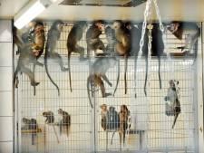 PvdA onthutst: 76 apen uit 'berucht Duits centrum' naar Tilburg
