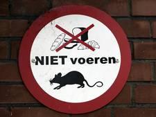 CDA stelt vragen over rattenoverlast in Sterrenwijk
