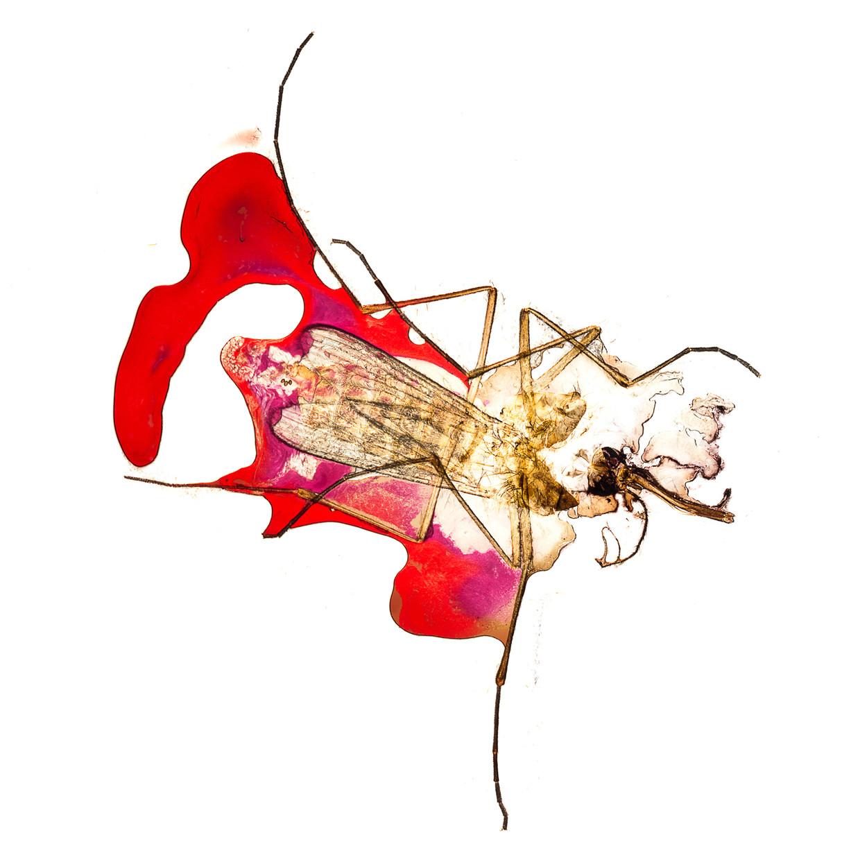 Het project Give & Take (2012) van fotograaf Jipil Jung, waar hij dood gemepte mugjes onder zijn microscoop heeft gefotografeerd.