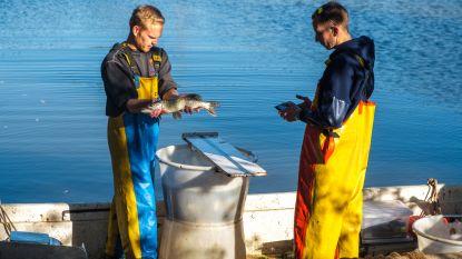 Visbestand 'Put Viersel' onderzocht:  Veel vis, weinig soorten