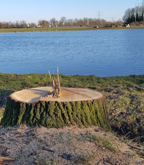 Kaalslag op Veldkamp tussen Hengelo en Borne