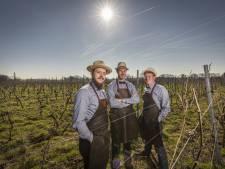 Eerste wijn van De Wijnmakers uit Rectum is klaar